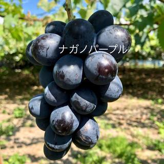 ぴろぴろ様専用 訳あり品 パープル1キロ(フルーツ)