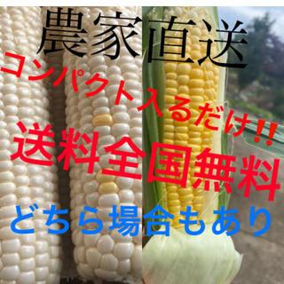 真凛様専用2箱品コンパクト(野菜)