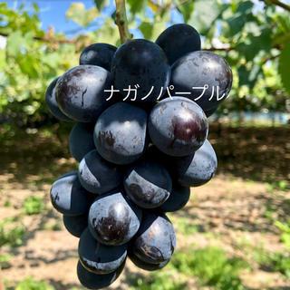 りんご様  ナガノパープル訳あり品2キロ(フルーツ)