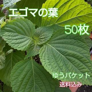 新鮮朝採り野菜 【エゴマの葉】 50枚(野菜)