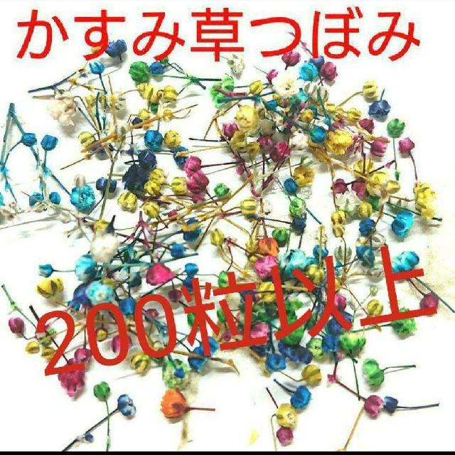 かすみ草ドライフラワー つぼみのみ ハンドメイドのフラワー/ガーデン(ドライフラワー)の商品写真