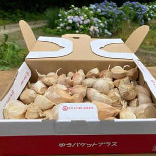 福地ホワイト六片ニンニク(野菜)