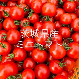 夏野菜詰め合わせセットA    おまけ付き(野菜)