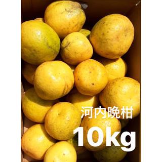 宇和ゴールド10Kg   河内晩柑 愛媛 みかん(フルーツ)