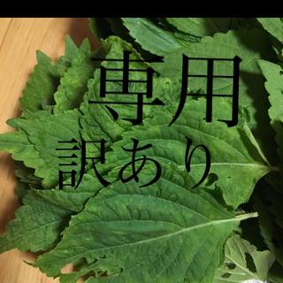 ピンクのばら様専用 訳ありエゴマの葉150グラム(野菜)