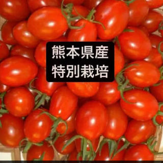 ミニトマトアイコ  1.5キロ(野菜)