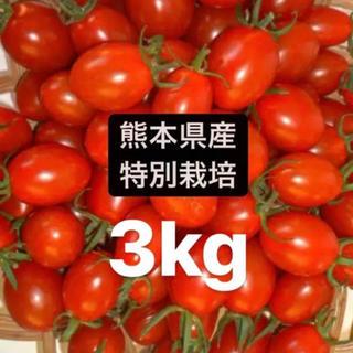 ミニトマトアイコ3キロ(野菜)