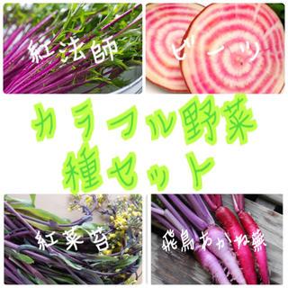 ★伝統野菜★カラフル野菜固定種の種セット(野菜)