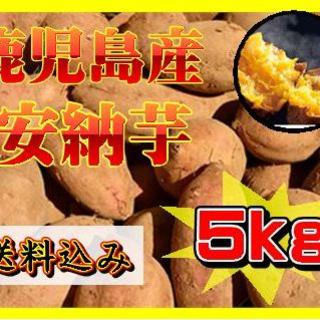 鹿児島産 安納芋 約5kg(貯蔵済み)(野菜)