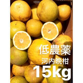愛媛 低農薬 宇和ゴールド15Kg   河内晩柑 みかん(フルーツ)