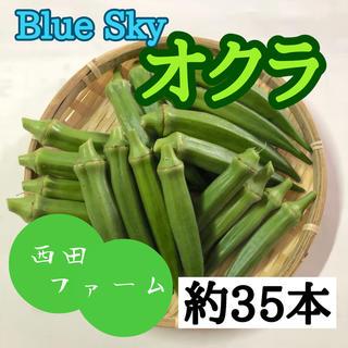 熊本県八代産 新鮮オクラ(ブルースカイ)約35本(野菜)