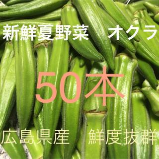 農薬不使用 自然栽培 広島県産 新鮮夏野菜 鮮度抜群 朝採りオクラ50本セット(野菜)