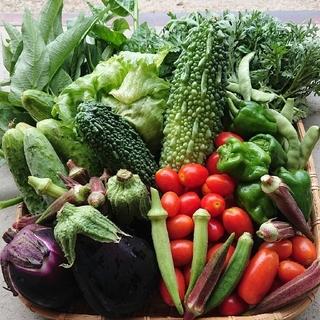 私のかわいい子供たち♪無農薬野菜♪(野菜)