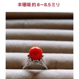 本珊瑚 約 8~8.5ミリ指輪(リング(指輪))