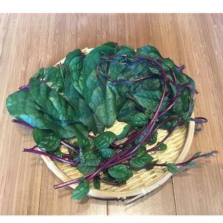 華様専用 つるむらさき 500g (野菜)