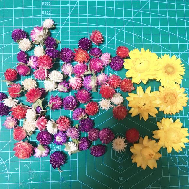 ドライフラワー ヘリクリサム 千日紅 B ハンドメイドのフラワー/ガーデン(ドライフラワー)の商品写真