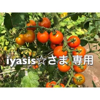 夏野菜セット(80サイズ)(野菜)