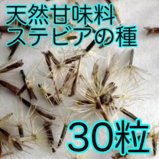【即購入歓迎】ステビアの種子 30粒(プランター)