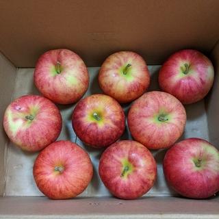 青森県産りんご ジョナゴールド9玉(フルーツ)