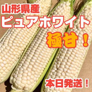 ✨極甘 糖度18度! とうもろこし ピュアホワイト(野菜)