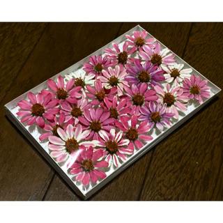 お花屋さんが作ったピンクジニアのドライフラワー   あんみつ姫  62(ドライフラワー)