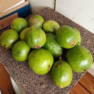 グァバ ピンク 1kg(フルーツ)