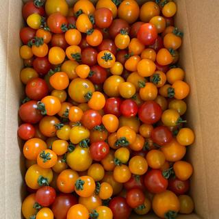 訳ありオレンジと赤2キロ 1(野菜)