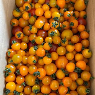 訳ありオレンジと赤2キロ ラスト(野菜)