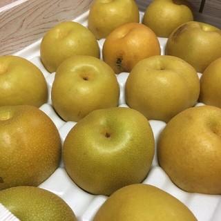 【送料込み】熊本産 豊水梨 優品 約5Kg入 10~24玉入 (フルーツ)