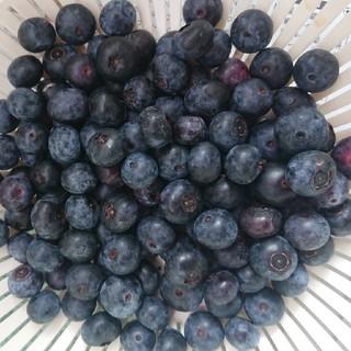 岩手県産 ブルーベリー 無農薬 冷凍2キロ(フルーツ)