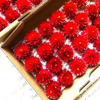 千日紅ドライフラワー、ヘッド、96個、素材、花材(ドライフラワー)
