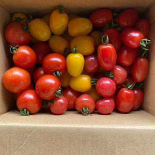 ミディトマト、ミニトマト詰め合わせ1、8kg(野菜)