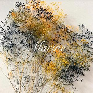 ソフトミニかすみ草 ハロウィンカラー 10g ハーバリウム花材(ドライフラワー)