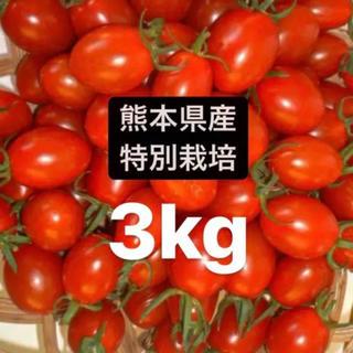 ミニトマトアイコ(野菜)