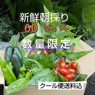 野菜箱詰め【野菜おまかせ♪野菜おためしセット】新鮮野菜(野菜)