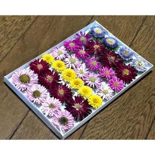 200円のお値引き‼️お花屋さんが贈る夏の終わりの感謝セール❣️ 11(ドライフラワー)