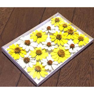 200円のお値引き‼️お花屋さんが贈る夏の終わりの感謝セール❣️  12(ドライフラワー)