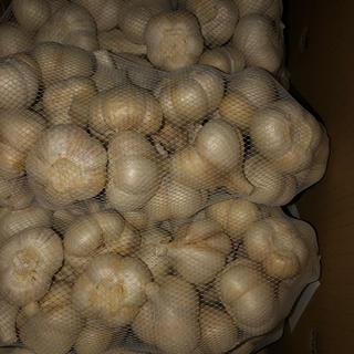 青森県福地ホワイト Sサイズにんにく10キロ送料無料タネ用黒にんにくに(野菜)