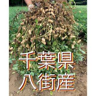 【空の蒼空様専用】9月5日収穫 千葉県八街産おおまさり6キロ(野菜)