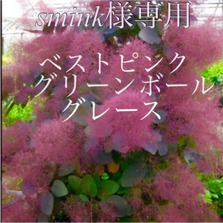 smink様専用 グレース  グリーンボール  ベストピンク×2(その他)