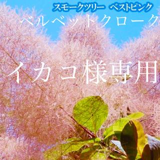 イカコ様専用 ベストピンク ベルベットクローク (その他)