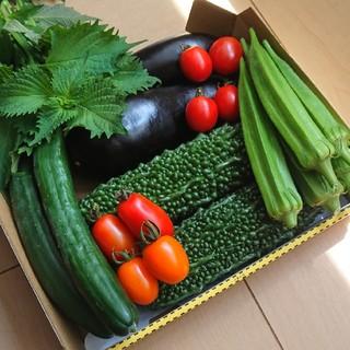 栄養満点【完全無農薬】お野菜の詰め合わせ(野菜)
