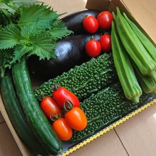 栄養満点【完全無農薬】お野菜詰め合わせ(野菜)
