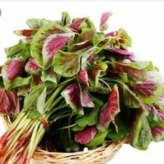 紫ひゆ菜 野菜の種 50個(野菜)