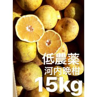 愛媛 低農薬 宇和ゴールド15Kg   河内晩柑(フルーツ)