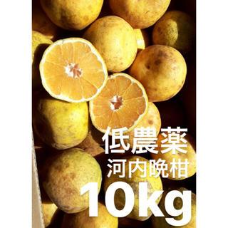 愛媛 低農薬 宇和ゴールド10Kg   河内晩柑(フルーツ)
