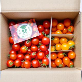 ミニトマト【農学博士のDr.トマトカロテンプラス 1Kg】☘️〜青森津軽産〜(野菜)