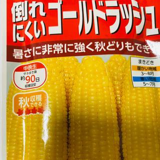 スイートコーン 「ゴールドラッシュ90」野菜の種 10個(野菜)