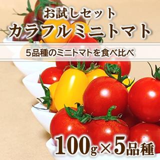 【お試しセット】カラフルミニトマト 100g×5品種 無農薬 高糖度 食べ比べ(野菜)