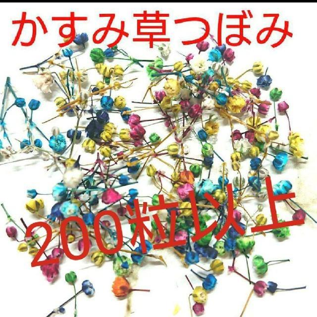 かすみ草ドライフラワー つぼみ200粒 ハンドメイドのフラワー/ガーデン(ドライフラワー)の商品写真